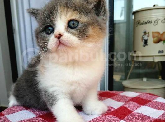Masum  Yüzlü  Baby Cat