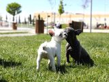 Renk Renk French Bulldog Bebekler