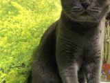 Ankara Çubuk'ta Kaybolan Kedimi Arıyorum