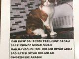 Sultanbeyli Mimar Sinan da Kedimiz Evden Kaçmıştır