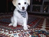 Yavru Terrier