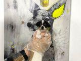 Satilik Muhteşem Kali̇te Teacup Chihuahua Yavrularimiz