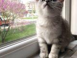 2 Eşsiz Güzel Kedi