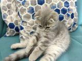 2.5 Aylık Özel ve Oyuncu Bir Kedi