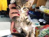 5 Yavru Kedi