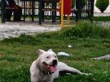 Damızlık Köpeğim Vardır Tam Dost Canlısı Dir