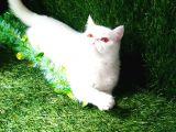 Sevimli Dişi Kedimiz