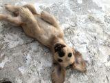 Yavru Köpeğimize Yeni Yuva Arıyoruz