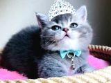 Prensesimiz Yeni Yuvasını Arıyor