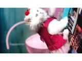İran Kedileri En Güzel Anne & Baba'nın  ilk bebişleri
